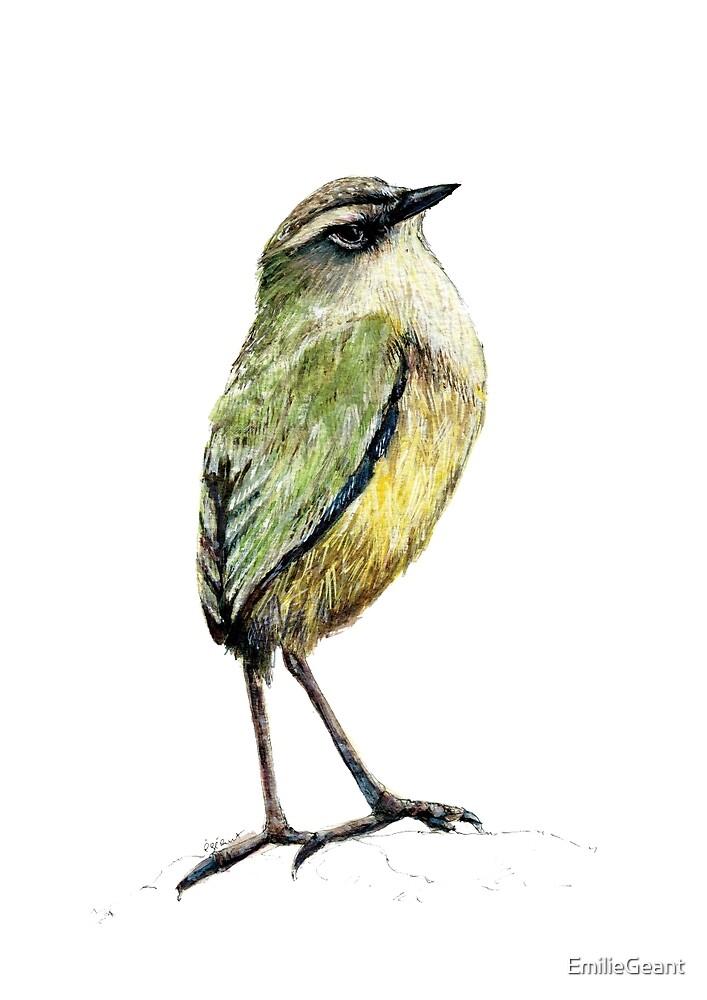 Mr Tuke, Rock wren bird of New Zealand by EmilieGeant
