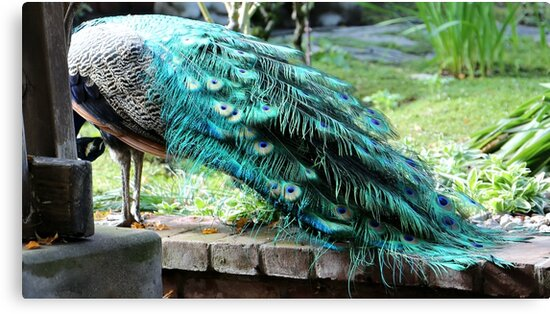 Fabulous Feathers by paigelacombe
