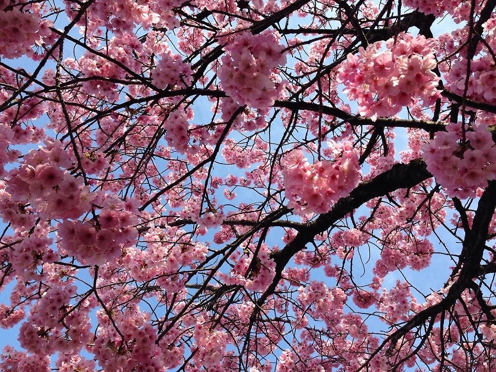 Flower japan pink by DEAD777Inside