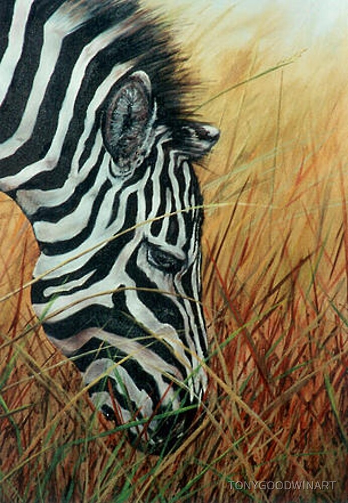 Zebra in the Grass by TONYGOODWINART