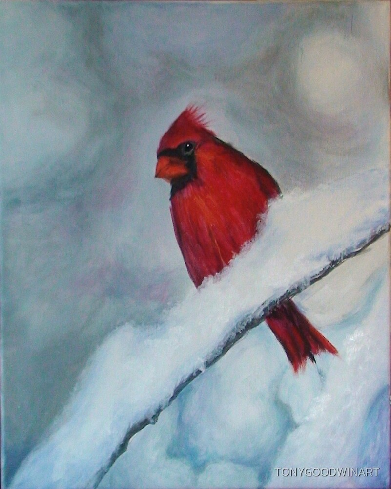 Cardinal in the Snow by TONYGOODWINART