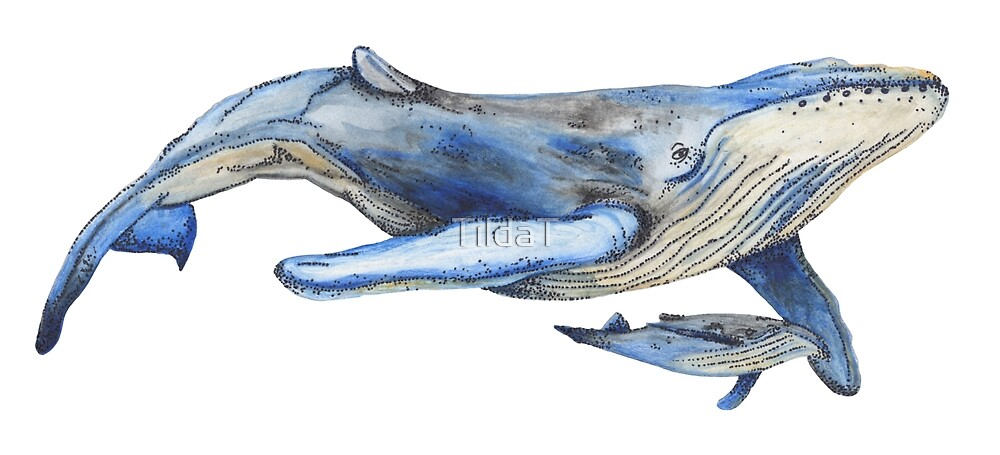Watercolour Whale by TildaT