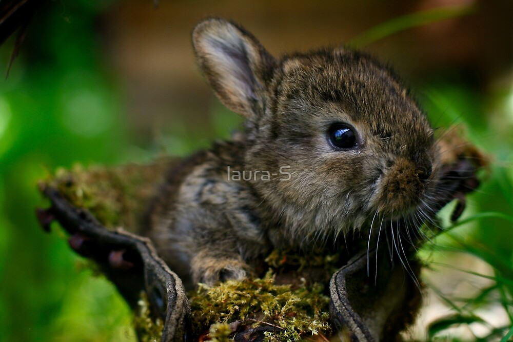 Rabbit by laura-S