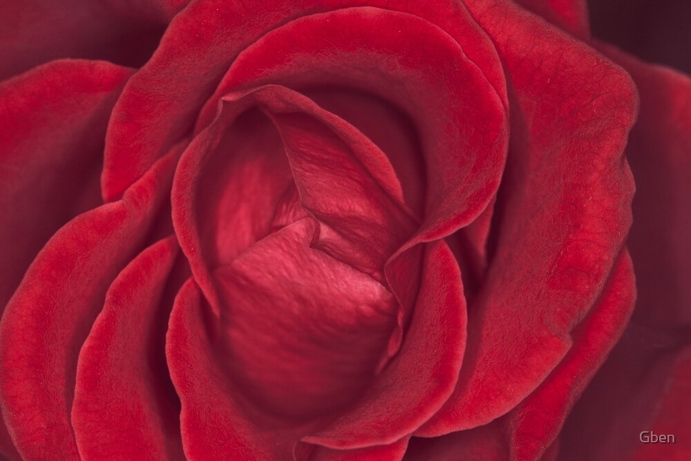 Red Velvet Rose by Gben