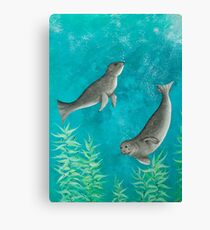 Playful Seals Canvas Print