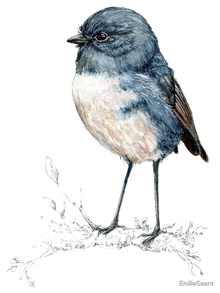 Mr Toutouwai , New Zealand native Robin bird by EmilieGeant