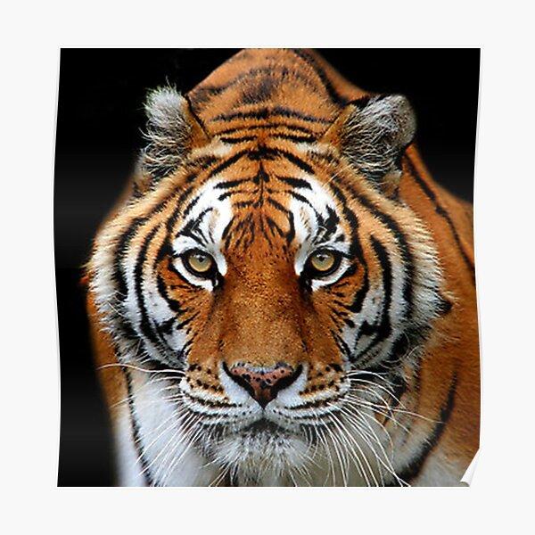 Looking into my Eyes Kuala Lumpur Zoo  Poster