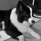 Jess, a damaged dog. by Meg Hart