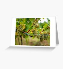 Ripening grapes on the vine Greeting Card