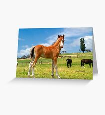 Welsh Mountain Foal Greeting Card