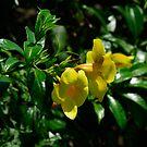 yellow & green... by Wieslaw Jan Syposz
