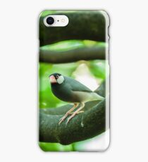 Java sparrow on a branch iPhone Case/Skin
