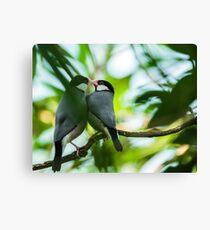Java sparrows mating ritual Canvas Print