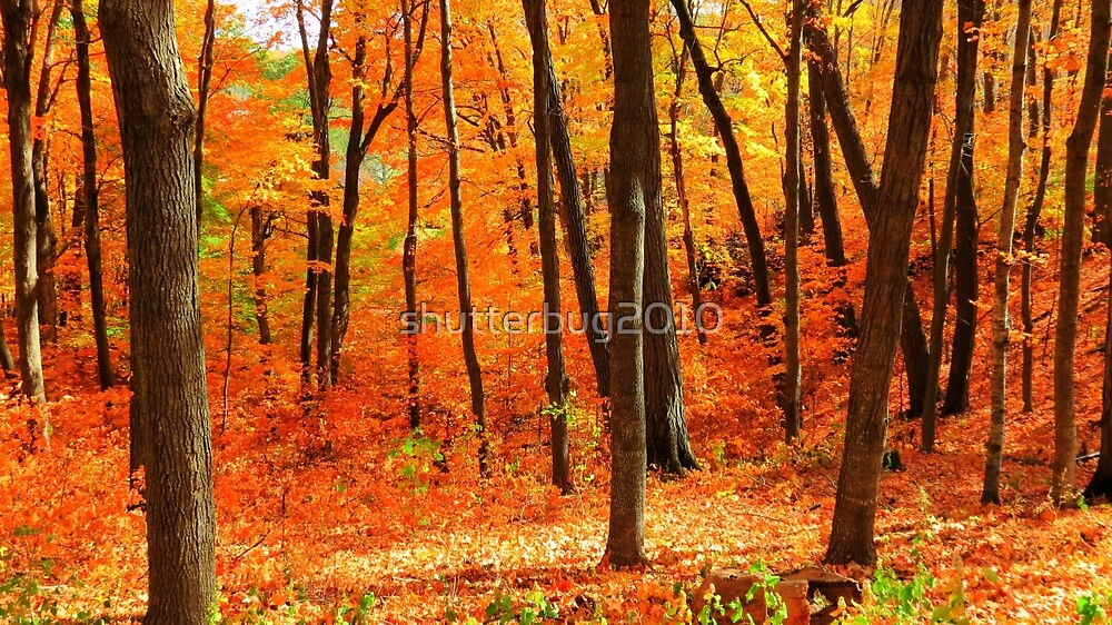 Autumns Fire by shutterbug2010