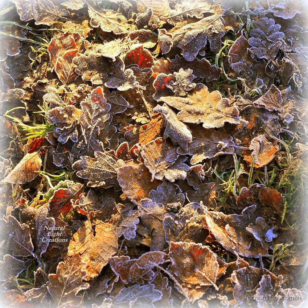 """ Winter Leaves Ensemble "" by Richard Couchman"
