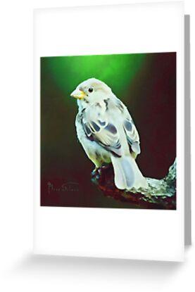 Birdie by Mark Salmon