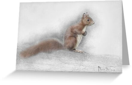 Red Squirrel by Mark Salmon