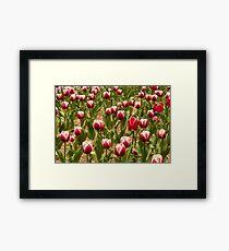 Leen Van Der Mark Tulips Framed Print