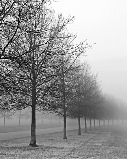 Foggy Tree Line by mal-photography