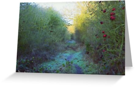The Old Railway Line by Mark Salmon
