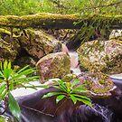 Double cascade, Mackintosh Creek, Tasmania by Nic Haygarth