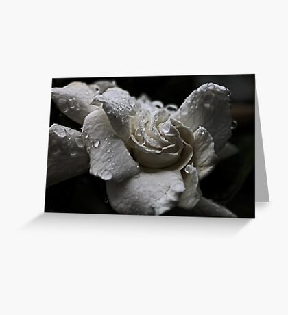 White Gardenia In The Rain Greeting Card