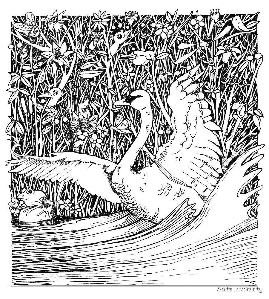 Swan Splash by Anita Inverarity