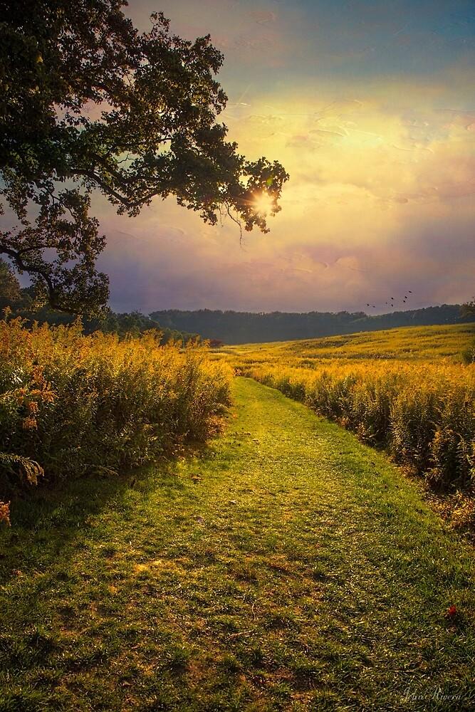 A Walk in Solitude by John Rivera