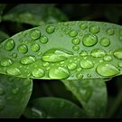 Water drops by Shaun Swanepoel