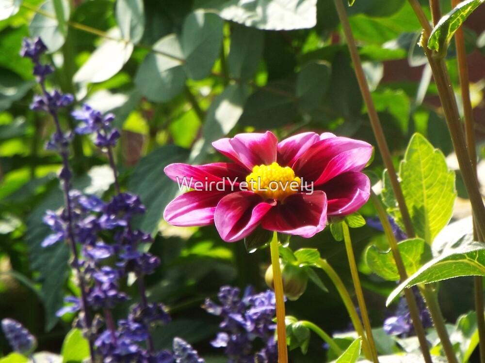 Purple Dahlia Dreaming by WeirdYetLovely