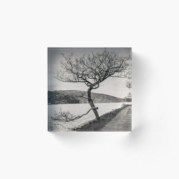 A Winter tree Acrylic Block