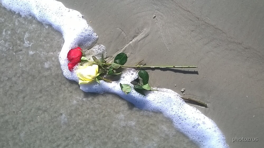 Roses in the Surf New Smyrna Beach Florida by photozrus