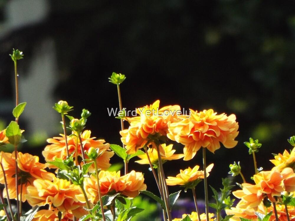 Chrysanthemum Calling by WeirdYetLovely
