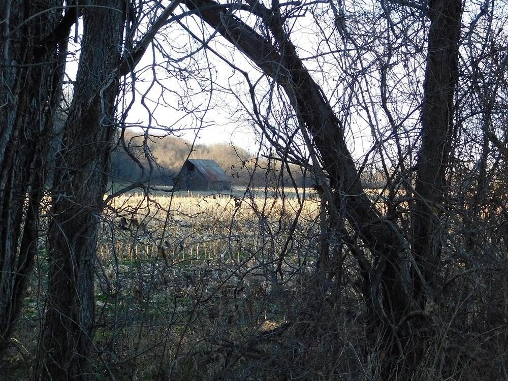 Hidden Barn by benjibay