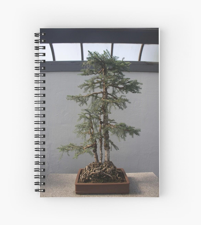 Bonsai Tree by Samantha Rubin