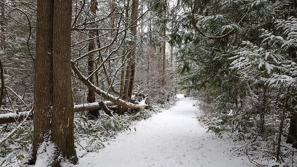 The Path Less Traveled (Winter) by metzge