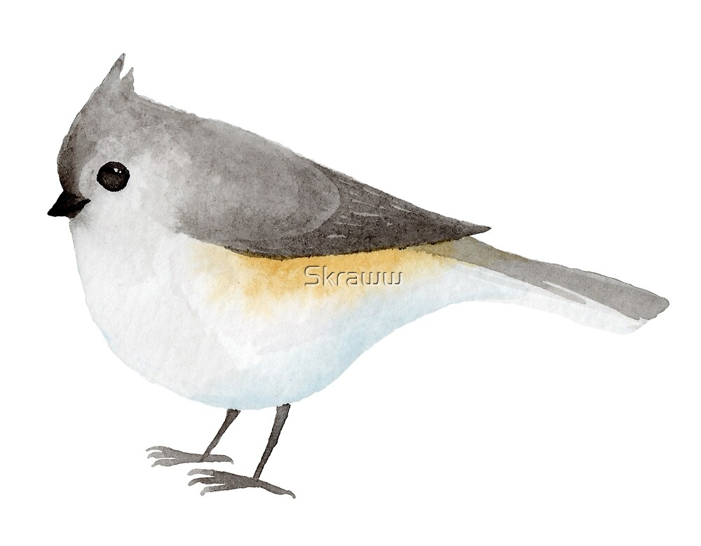 Watercolour Tufted Titmouse by Skraww