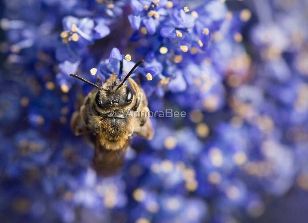 Andrena on Blue by AnnoraBee