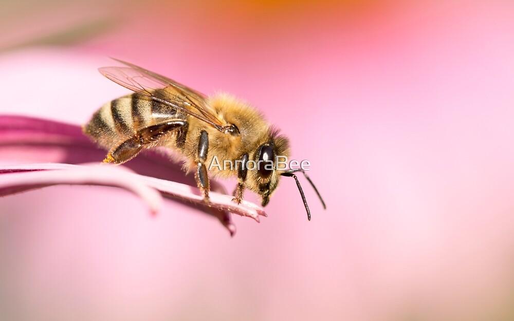 Honeybee on Pink by AnnoraBee