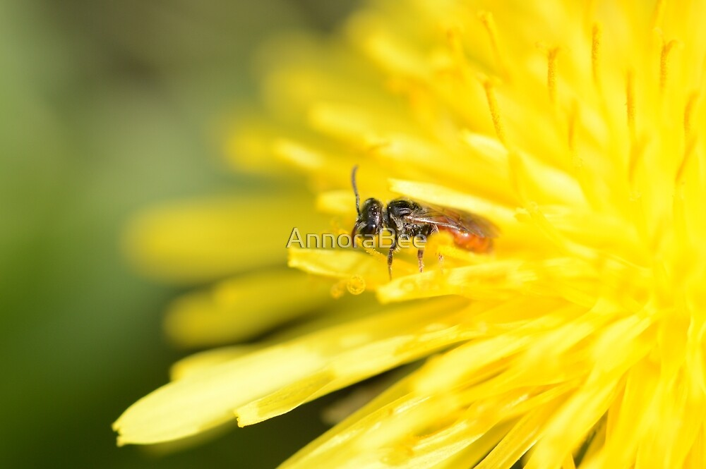 Sphecodes on Yellow by AnnoraBee