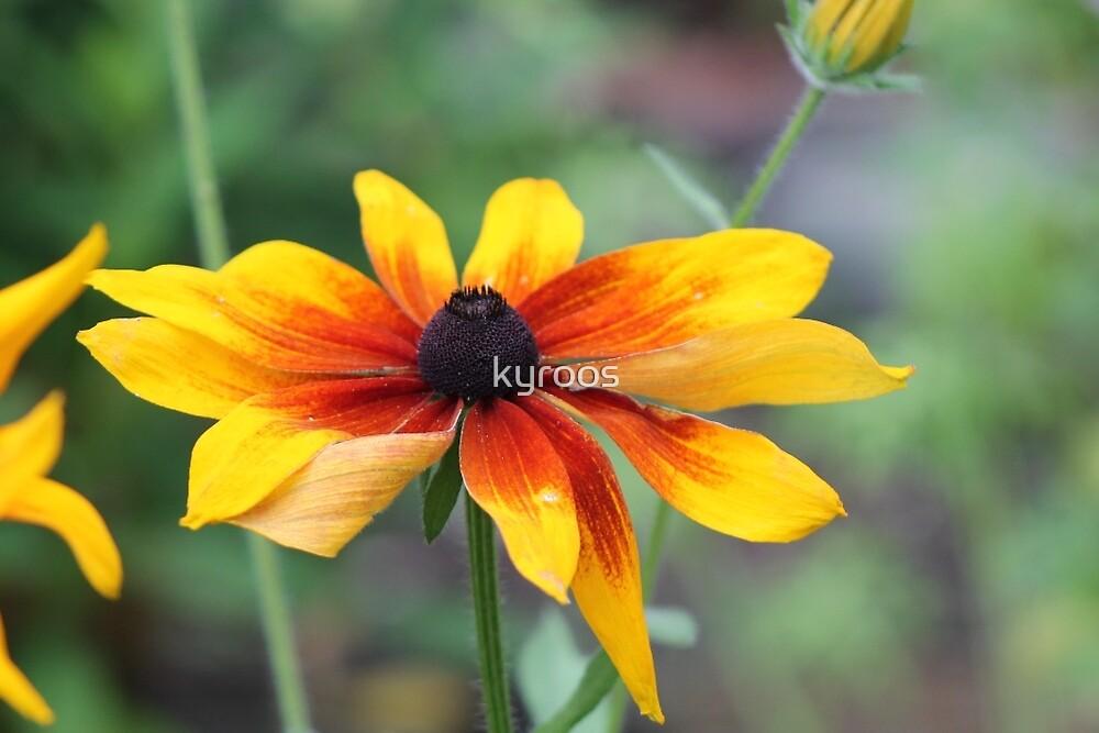 Sun - Flower by kyroos