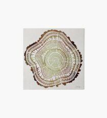 Lámina de exposición Anillos de árbol - Acuarela