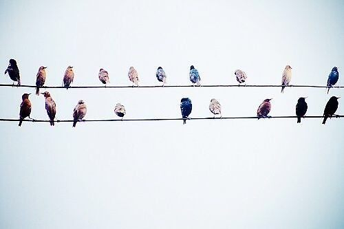 Birds on a Wire by skdancer