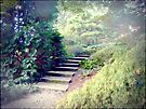 A Day At The Arboretum #2 - The Ascent by Benedikt Amrhein