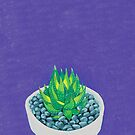 Succulent by marlene veronique holdsworth