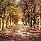 Path 2 by DAntas