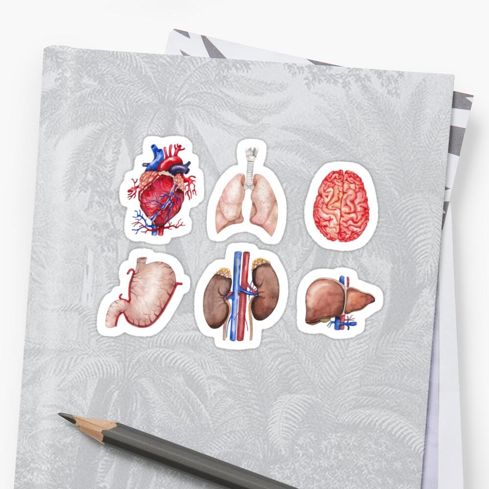 Colección de anatomía de acuarela Pegatina