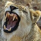 A very verbal lioness! by Anthony Goldman