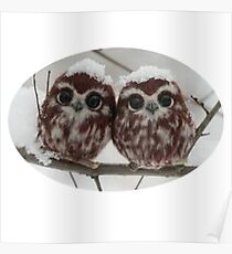Two happy little owls Poster