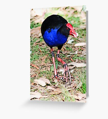 Eastern Swamphen Greeting Card
